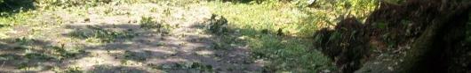 Cinquecento alberi abbattuti nel Parco di Monza dal maltempo