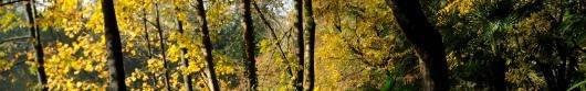 Piano di indirizzo forestale