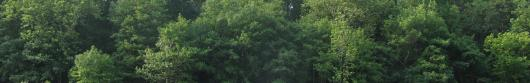 Istanze di taglio bosco