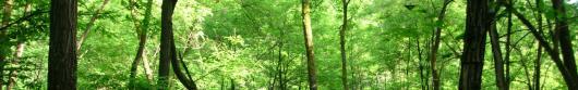 Vincolo Idrogeologico e trasformazione dei boschi