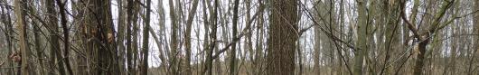 Richieste di accertamento soprassuolo boscato